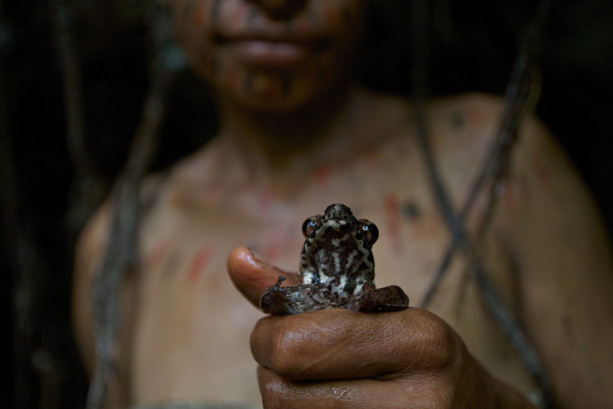 Papua New Guinea 2011- Births in the Jungle | Wild Born Project