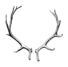 antlers1